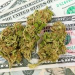 Why Marijuana Businesses Can't Get Bank Accounts